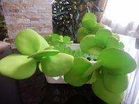 Набор авторской посуды, состоящий из 2 единиц (конфетница или фруктовница + емкость для орехов или салфетница). Основа - пластик; декорирована цветами из фоамирана ручной работы.  Р-р: 19см*12см*6,5см  Можно мыть в прохладной воде.  Могу выполнить в других размерах и цветовых сочетаниях, по вашему желанию.