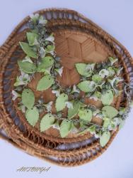 Комплект На каждый день Комплект сережек и колье, в зеленовато-белых тона. Серьги - длиной 6 см, колье длиной 50 см Использовались материалы - запекаемая полимерная глина, фурнитура под серебро.