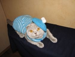 Теплая, оригинальная одежда для кошек и собак. Индивидуальный подход при выборе модели, цветовой гаммы. Огромный выбор!!!!  Материал- шерсть 50%, акрил 50%.