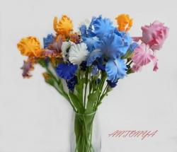 Разноцветные ирисы